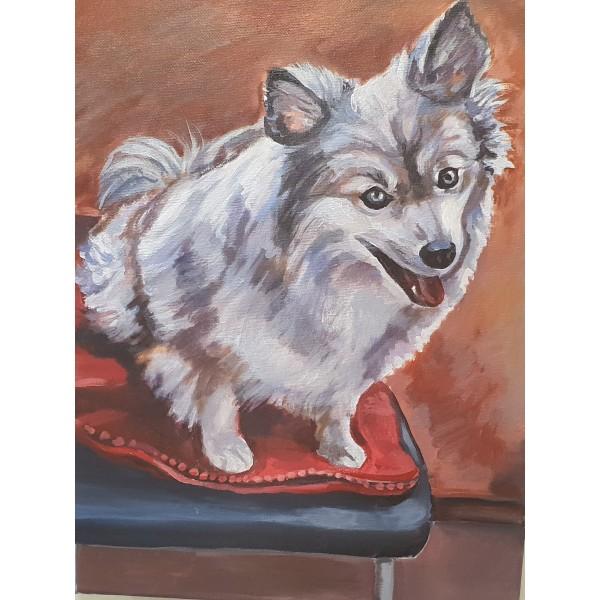 Портрет на Куче - по снимка