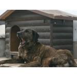 Хотел за кучета Trifonov Land Dog Hotel