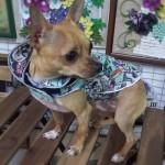 Dog Jacket Елек за Куче с Качулка по ПОРЪЧКА
