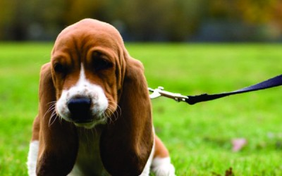 Първа разходка на куче