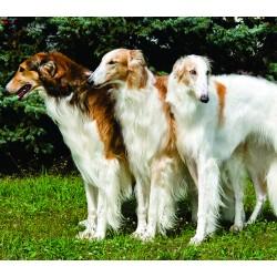 Развъдник за кучета - списък на развъдниците в цялата страна