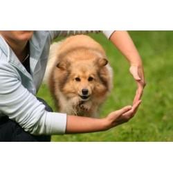 8 основни грешки при обучението на кучето