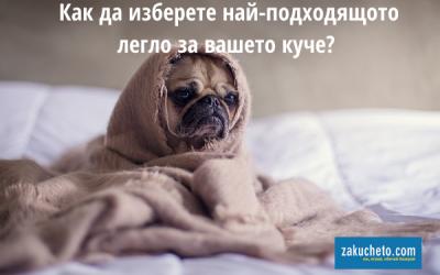 Легло за куче – как да изберем най-подходящото?