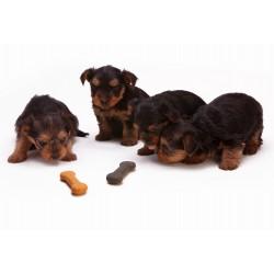Коя е най-добрата кучешка храна?