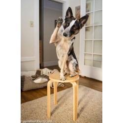 8 най-занимателни игри за кучета вкъщи