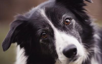 Грешки в отглеждането на кучета, които собствениците допускат