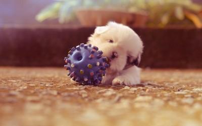 Играчки за кучета бебета, които ще спасят покъщнината ви