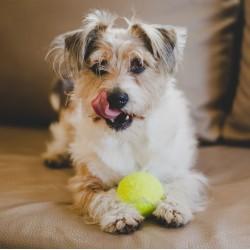 Играчки за кучета - необходими ли са?