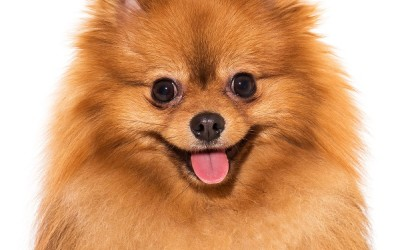Как да изберете развъдник на кучета? – Списък на развъдниците в София
