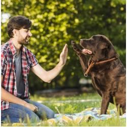 Кога да запишете кучето си на училище за кучета? Списък на училищата за кучета в София и страната