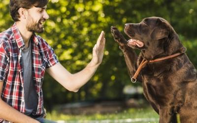Кога да запишете кучето си на училище за кучета? Списък на училищата за кучета в София