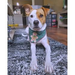Как да научим кучето да спре да маркира вкъщи?