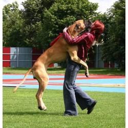 Как да научим кучето да не скача по хората?
