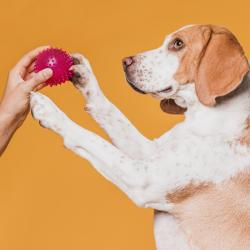 Празнични игри с кучето