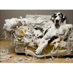 Как да научим кучето си да е само вкъщи?