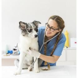Избор на ветеринарна клиника – списък на ветеринарни клиники в София