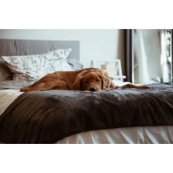Къде да спи кучето ми?