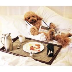 Списък с хотели за кучета