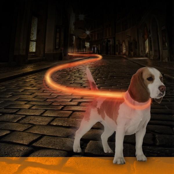 Duvo светещ LED нашийник за кучета