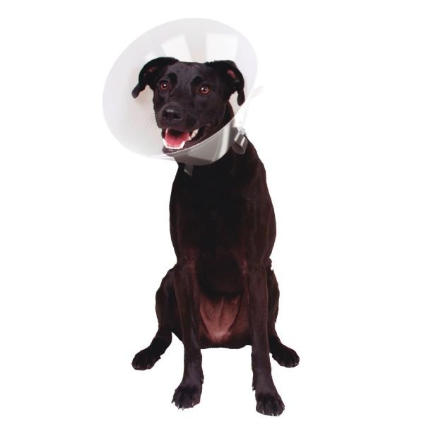 Gloria - Медицинска яка за кучета