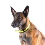 Julius-K9 IDC Lumino - Нашийник за Кучета