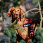 Julius K9  IDC Color & Gray Belt Powerharness  Червен Нагръдник за Кучета