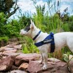Julius K9  IDC Color & Gray Belt Powerharness  Син Нагръдник за Кучета