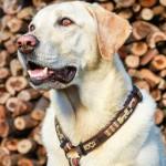 Rogz Mocha Bone Рогз Нагръдник за Куче