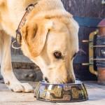 Купичка за Куче - Rogz Mocha Bone