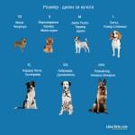 Kerbl Dog Socks Bruno - Чорапки за куче Бруно комплект 4 броя