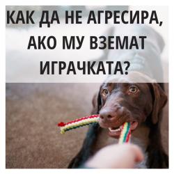 Как да науча кучето да не агресира, ако му вземат играчката?