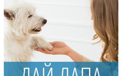Как да науча кучето да дава лапа?