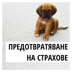 Как да помогнем на кучето да преодолее страховете си?