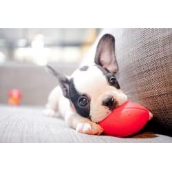 Как да научим кучето да не гризе обувки и всичко вкъщи?