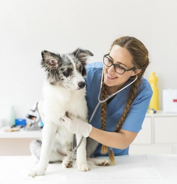 Списък на ветеринарните клиники в София